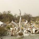 Parc National de Djoudj